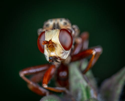 Brown and Black Insect in Macro Photography
