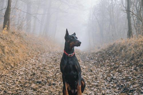 Fotos de stock gratuitas de bosque, caballero, colorido, con niebla