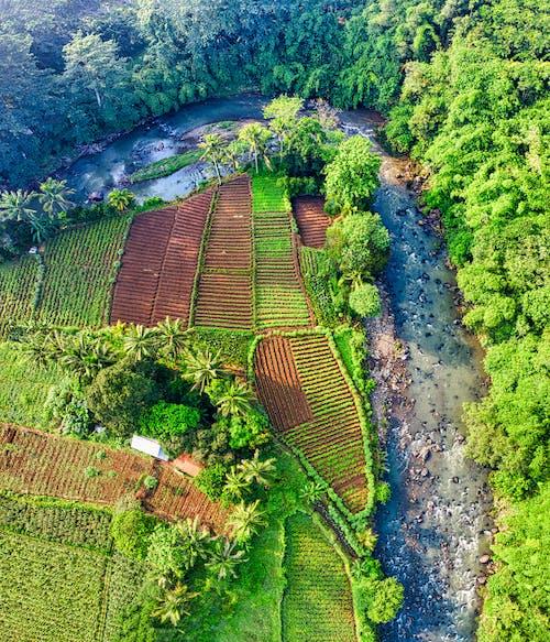 Foto d'estoc gratuïta de aeri, agricultura, arbres, càmera de dron