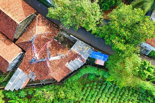 Vista Aérea De Casas Y árboles