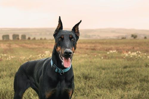 Fotos de stock gratuitas de animal, caballero, mascota, naturaleza