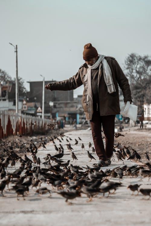 Mężczyzna Karmi Ptaki