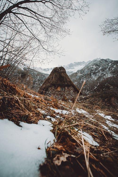 下雪的, 似雪, 冬季, 冬季景觀 的 免費圖庫相片
