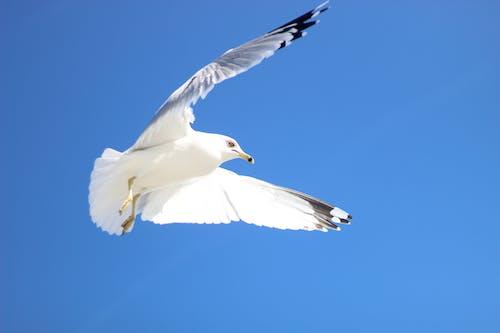 Free stock photo of animal, bird of feathers, birds