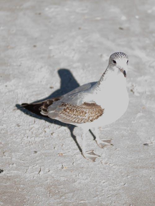 Free stock photo of animal, bird, wild life