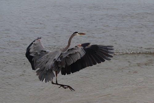 Free stock photo of beach, bird, wild life