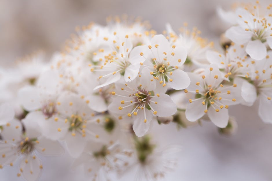 Close up photo of white petaled flowers