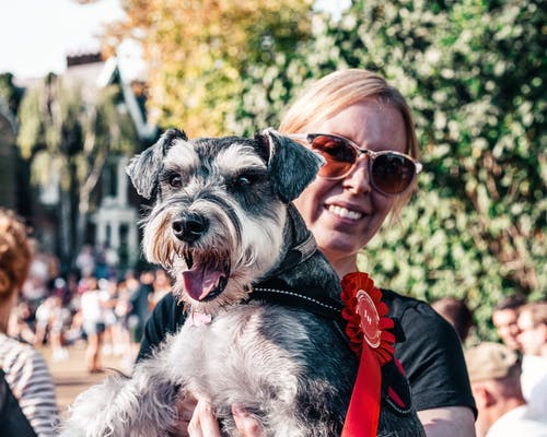 가정의, 개, 개 쇼의 무료 스톡 사진