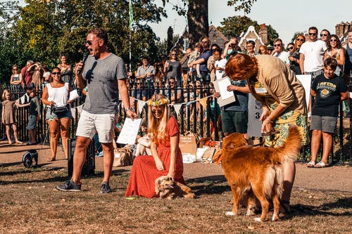 Free stock photo of animal, audience, canine
