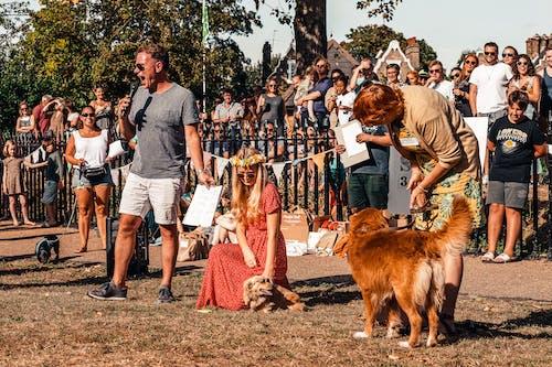 가정의, 개, 개의의 무료 스톡 사진