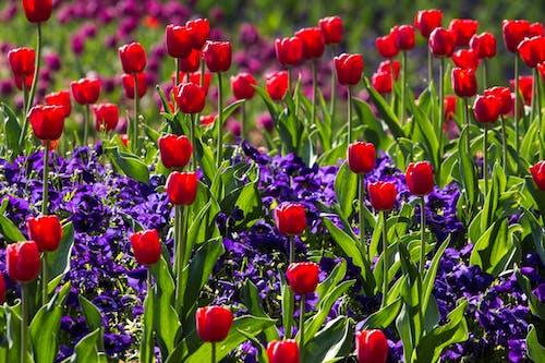 Безкоштовне стокове фото на тему «дикі квіти, завод, квіти, квітка»