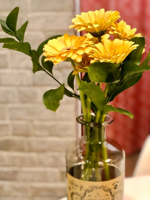 Foto stok gratis bunga-bunga indah, cinta adalah cinta, di rumah, mesra
