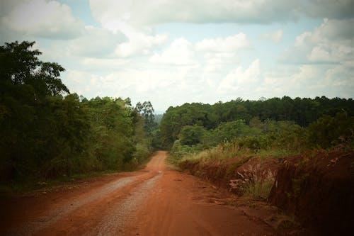 açık yol, ağaç gövdesi, bitki örtüsü içeren Ücretsiz stok fotoğraf