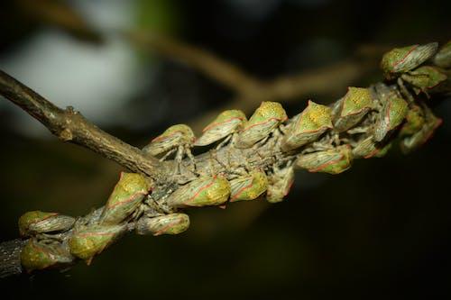 ağustos böceği, cırcır böceği, doğal gözlük içeren Ücretsiz stok fotoğraf