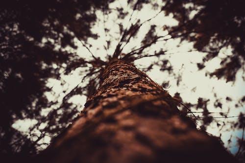 ağaç gövdesi, bitki örtüsü, büyük ağaç içeren Ücretsiz stok fotoğraf