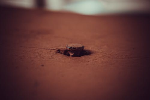 karanfil içeren Ücretsiz stok fotoğraf