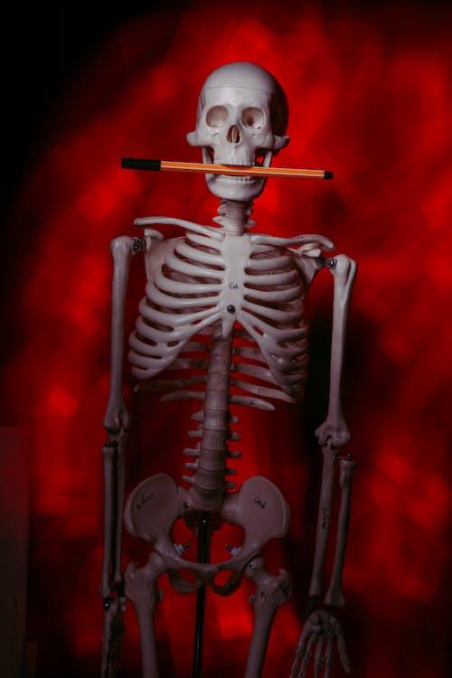 iskelet, kırmızı renk, korku içeren Ücretsiz stok fotoğraf
