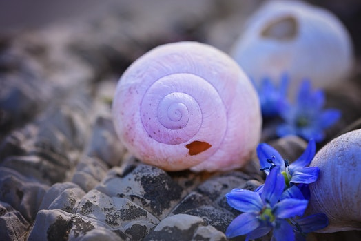 White Snail Shell on Rocks