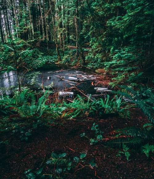 Immagine gratuita di foresta, lago di riso, north vancouver