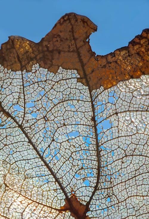 Kostenloses Stock Foto zu tekstura starog lišća