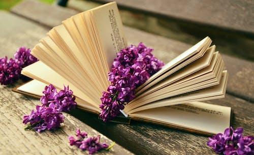 Gratis arkivbilde med blomst, blomster, blomstre, flora