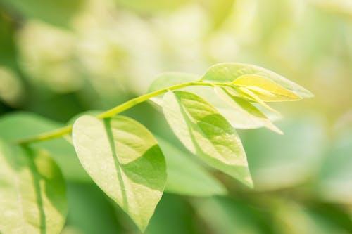 Ảnh lưu trữ miễn phí về ánh sáng, ánh sáng mặt trời, hình nền thiên nhiên, hữu cơ