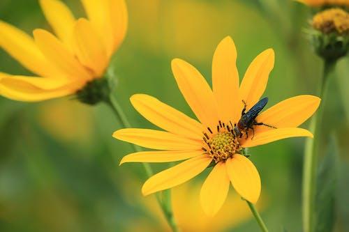 Бесплатное стоковое фото с желтый, завод, красивый, лепестки
