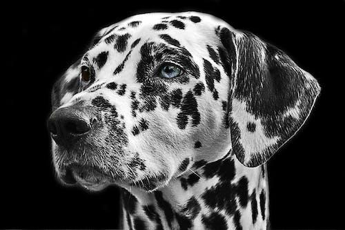 Imagine de stoc gratuită din animal, animal de casă, animal de companie, blană