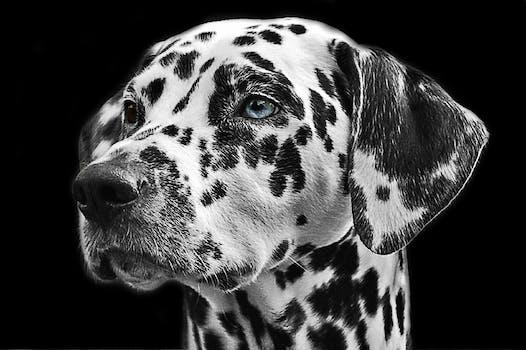 Free stock photo of animal dog pet fur