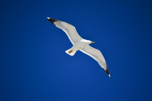 Free stock photo of bird in the sky, blue, blue sky