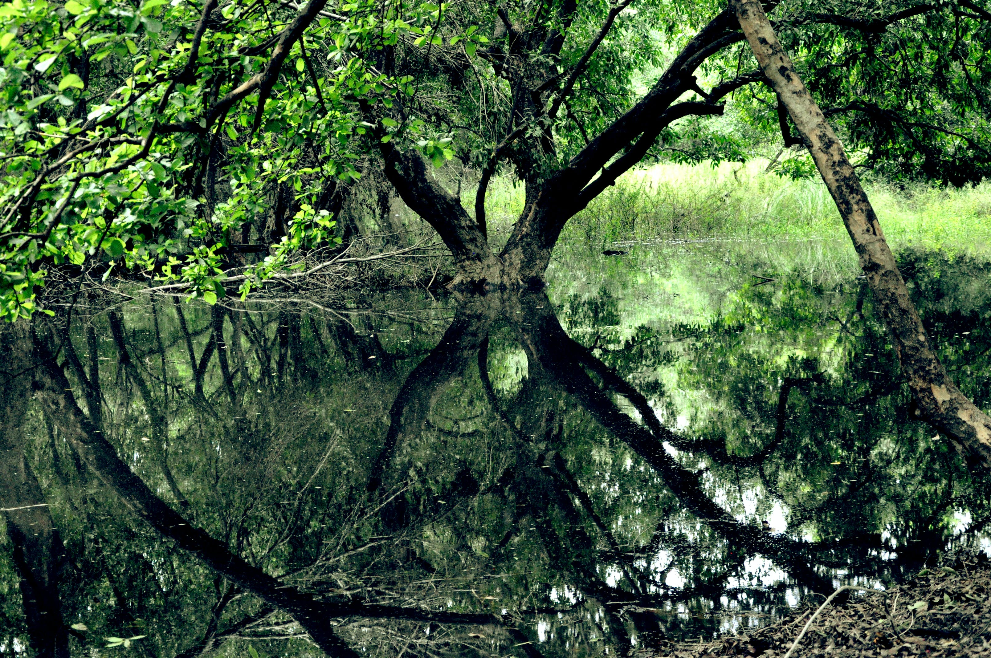 Free stock photo of calm waters, forest, greenery, reflection
