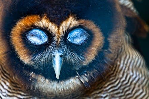 Бесплатное стоковое фото с голубые глаза, природа, птица, сова