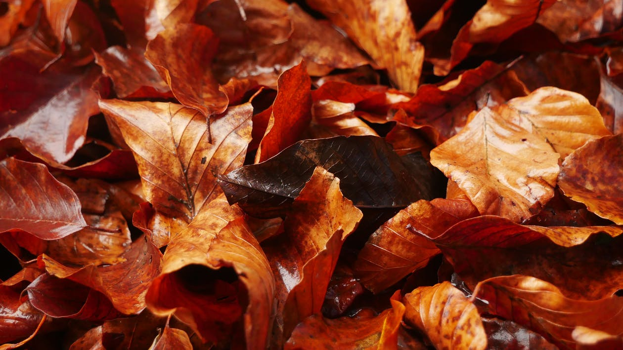Close-Up Photo of Brown Leaves