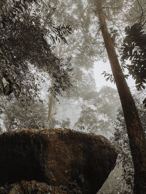 Big Rock Surrounded by Tall Trees