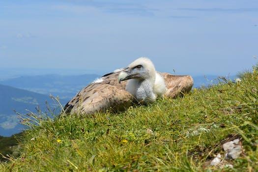 Free stock photo of bird, animal, wildlife, animal photography