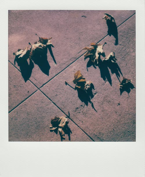 Fotos de stock gratuitas de hojas, hojas de arce, hojas secas, sombra