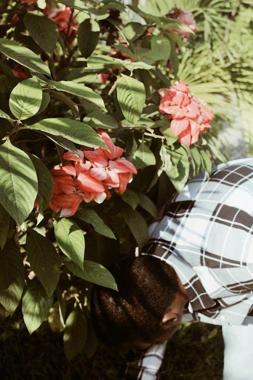 Безкоштовне стокове фото на тему «Африка, Африканський, Африканський чоловік, декоративні рослини»