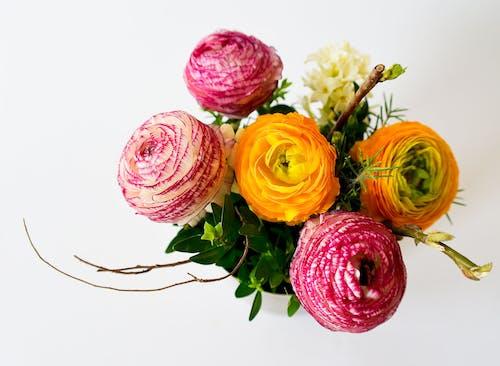 カラフル, ブーケ, フラワーズ, 咲くの無料の写真素材