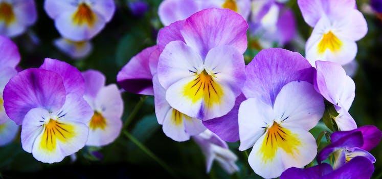 White and purple petal flower focus photography free stock photo white purple flower mightylinksfo
