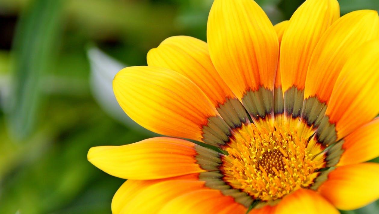 ดอกไม้, พฤกษา, วอลล์เปเปอร์ HD