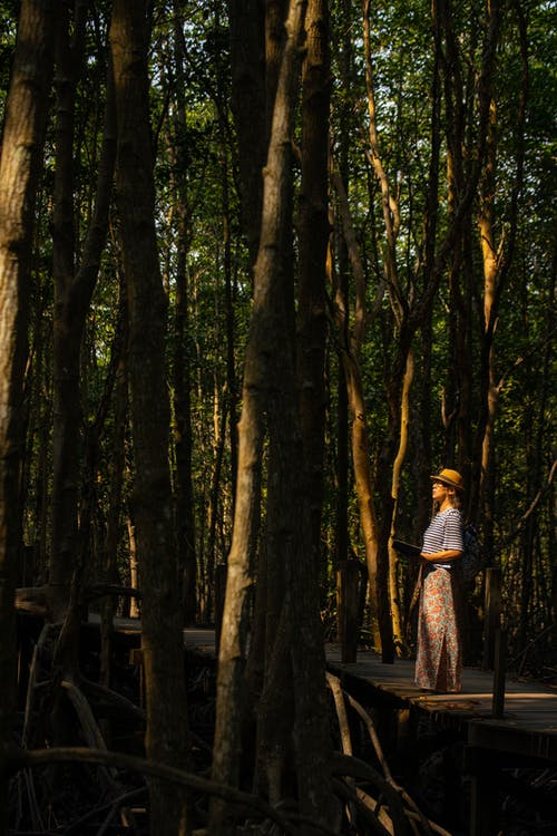 Free stock photo of environment, forest, globe, mangrove