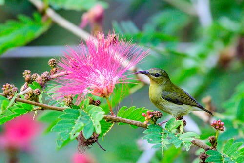 Free stock photo of birds, flowers, green, wild animal
