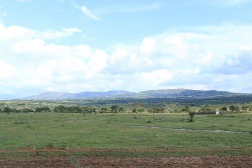 Free stock photo of africa, Green Savannah, Kenya, Open Savannah