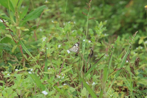 Free stock photo of African Butterfly, insect, White and Brown butterfly
