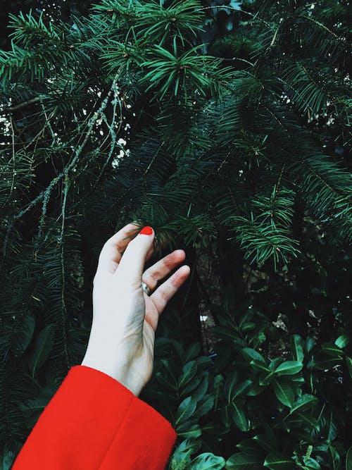 原本, 手, 接觸, 松树叶 的 免费素材照片