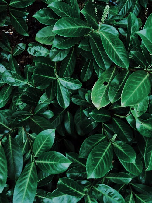 Green Leaves Plant