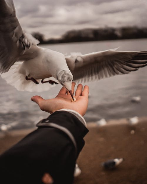 Hand of A Person And White Bird