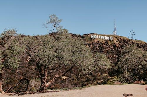 Fotobanka sbezplatnými fotkami na tému Amerika, Hollywood, Kalifornia, Los Angeles