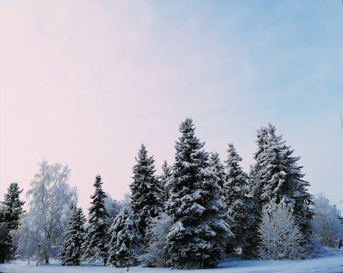 คลังภาพถ่ายฟรี ของ ต้นไม้, ธรรมชาติ, ป่า