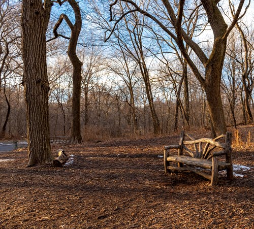 Free stock photo of bench, central park, leafless trees